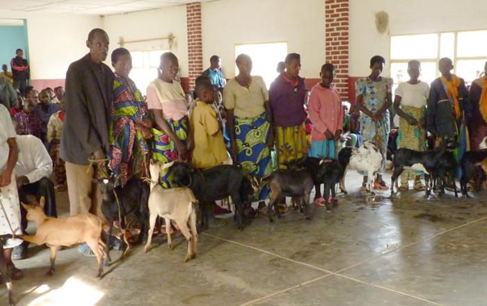 Goat Distribution